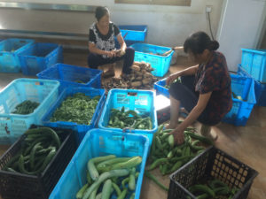 Figure 3. Farmers preparing vegetable shares for customers at a community supported agriculture farm in Nanjing